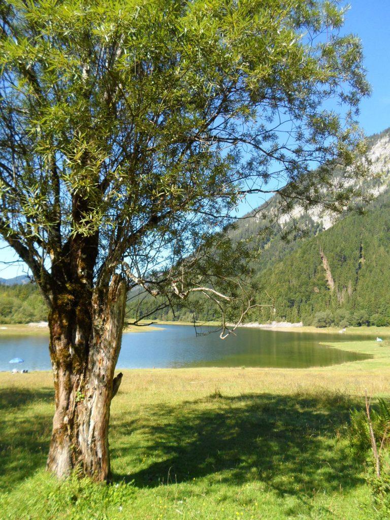 Sommer am Lödensee